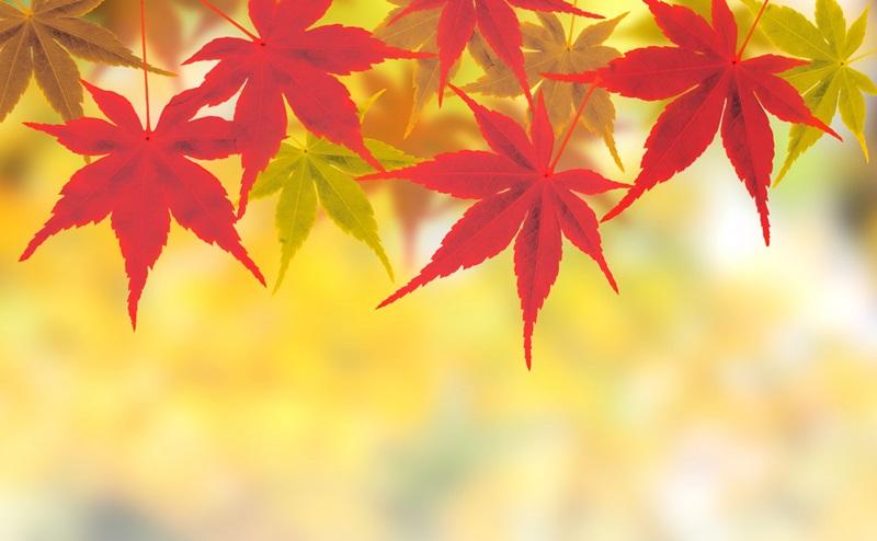 秋の毛穴トラブル